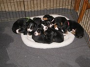 Pups sleep at  4 weeks old