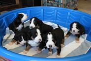 puppy pool 4 weeks