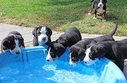 Water Fun at  6 weeks old