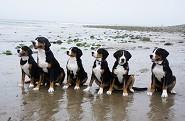 Baron,Aunt Clementine,Lucy,Arbor, Sophie & Bentley