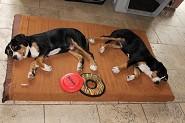 Baron & Lucy  @ 14 weeks