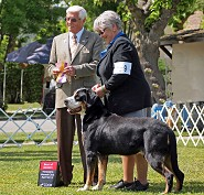 Roy~  Best  of Breed from Veterans class 4/13