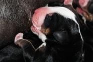 White Boy ~ 2 days old