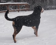 Sire : Riley  loves the snow !