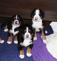 Pups at 4 weeks