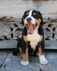 Pink Yawns ...