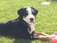 Berger ( White Boy ) 4 months