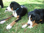 Ranger & Bailey  4 months