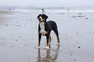 Ventura Beach 15 months  7/12