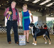 Grand Champion~  Bred by Owner Handled