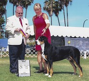 Best of Breed ~ Long Beach KC 6/13