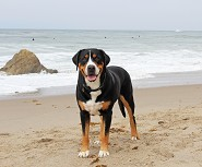 Max 3 years old ~ Leo Carillo Beach 7/14