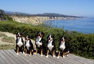 Gus w/ litter mates Santa Barbara 2013