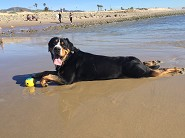 exhausted ball play at Ventura beach