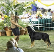 Alyssa w/ Gambit Breeders showcase AOM