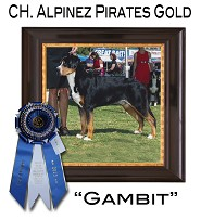 Gambit ~ Best of Winners