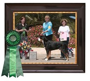 Best Bred by Exhibitor<br> GSMDCA Speciality 2009