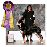 Best of Breed at Simi Valley KC