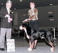 New Champion ~ Bred By Exhibitor