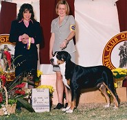 Best of Breed ~ Beverly Hills KC 2002